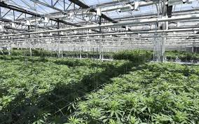 Micro Lab Farms New California Cultivation Complex Approved